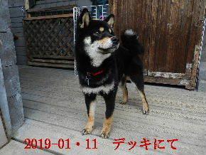 2019-01・11 今日の麻呂 (5).JPG