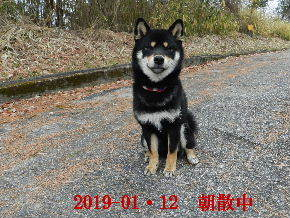 2019-01・12 今日の麻呂 (1).JPG