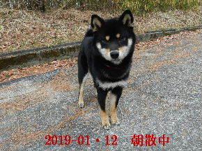 2019-01・12 今日の麻呂 (2).JPG