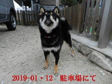 2019-01・12 今日の麻呂 (3).JPG