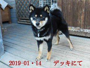 2019-01・14 今日の麻呂 (6).JPG