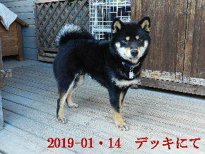 2019-01・14 今日の麻呂 (7).JPG