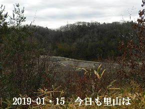 2019-01・15 今日の里山は・・・ (3).JPG