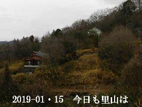 2019-01・15 今日の里山は・・・ (4).JPG