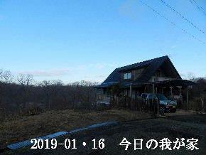 2019-01・16 今日の里山は・・・ (1).JPG
