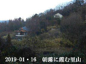 2019-01・16 今日の里山は・・・ (4).JPG