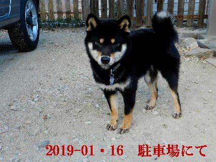 2019-01・16 今日の麻呂 (3).JPG