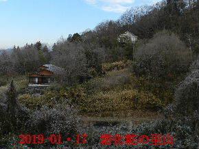 2019-01・17 今日の里山は・・・ (4).JPG