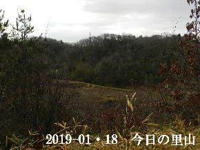 2019-01・18 今日の里山は・・・ (3).JPG