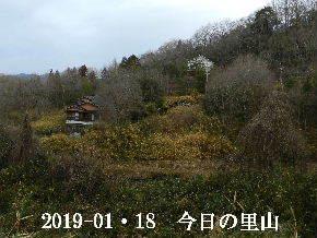 2019-01・18 今日の里山は・・・ (4).JPG