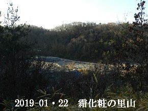 2019-01・22 今日の里山は・・・ (3).JPG