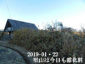 2019-01・22 霜化粧の里山・・・ (8).JPG
