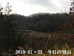 2019-01・23 今日の里山は・・・ (3).JPG
