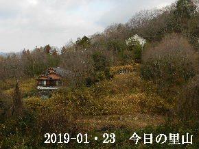 2019-01・23 今日の里山は・・・ (4).JPG