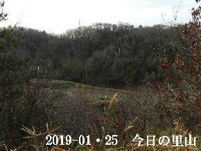 2019-01・25 今日の里山は・・・ (3).JPG