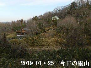 2019-01・25 今日の里山は・・・ (4).JPG
