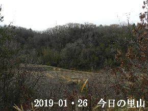 2019-01・26 今日の里山は・・・ (3).JPG