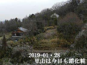 2019-01・28 今日の里山は・・・ (4).JPG