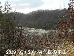 2019-01・29 今日の里山は・・・ (3).JPG