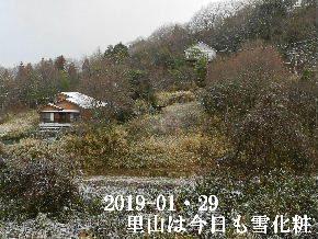 2019-01・29 今日の里山は・・・ (4).JPG