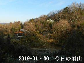 2019-01・30 今日の里山は・・・ (4).JPG