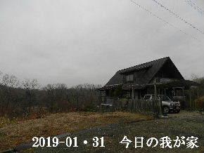 2019-01・31 今日の里山は・・・ (1).JPG