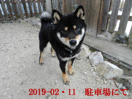 2019-02・11 今日の麻呂 (5).JPG