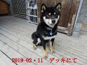 2019-02・11 今日の麻呂 (8).JPG