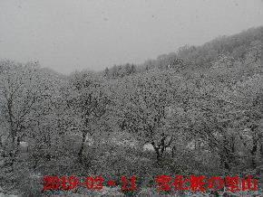 2019-02・11雪化粧の里山 (15).JPG