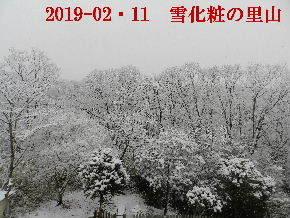 2019-02・11雪化粧の里山 (9).JPG