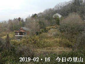 2019-02・16 今日の里山は・・・ (4).JPG