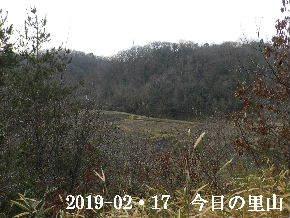 2019-02・17 今日の里山は・・・ (3).JPG