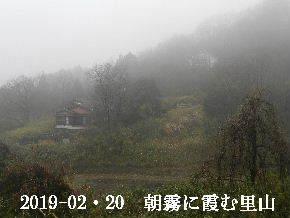 2019-02・20 今日の里山は・・・ (4).JPG