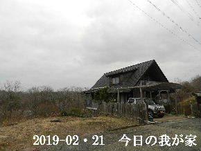 2019-02・21 今日の里山は・・・ (1).JPG