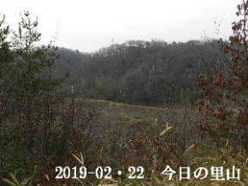 2019-02・22 今日の里山は・・・ (3).JPG