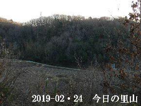 2019-02・24 今日の里山は・・・ (3).JPG