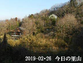 2019-02・26 今日の里山は・・・ (4).JPG