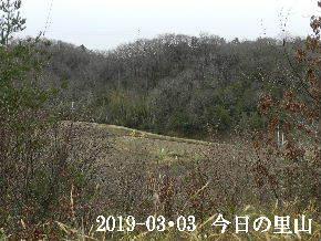 2019-03・03 今日の里山は・・・ (3).JPG