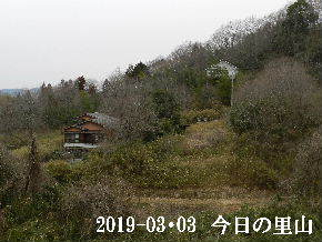 2019-03・03 今日の里山は・・・ (4).JPG