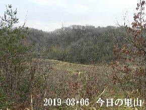 2019-03・06 今日の里山は・・・ (3).JPG