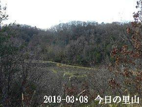 2019-03・08 今日の里山は・・・ (3).JPG