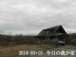 2019-03・10 今日の里山は・・・ (1).JPG