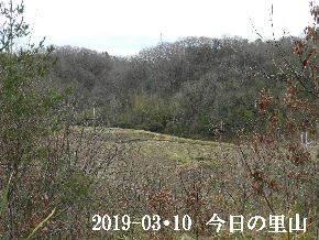 2019-03・10 今日の里山は・・・ (3).JPG