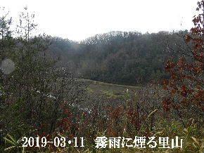 2019-03・11 今日の里山は・・・ (3).JPG