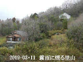 2019-03・11 今日の里山は・・・ (4).JPG
