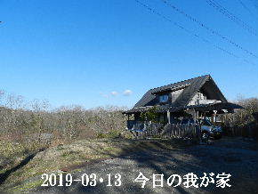 2019-03・13 今日の里山は・・・ (1).JPG