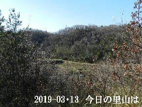 2019-03・13 今日の里山は・・・ (3).JPG