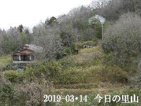 2019-03・14 今日の里山は・・・ (4).JPG