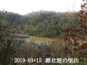 2019-03・15 今日の里山は・・・ (3).JPG