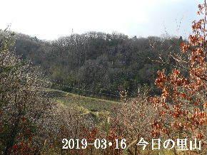 2019-03・16 今日の里山は・・・ (3).JPG